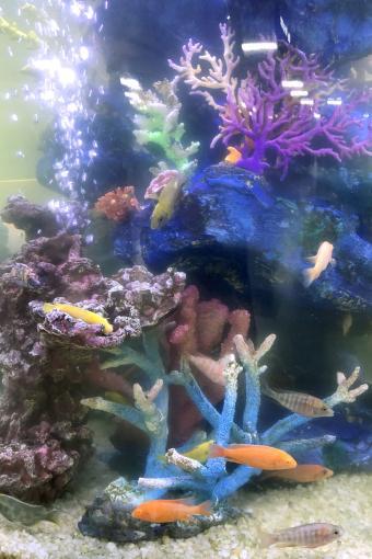 Foggy Cylinder Fish Tank