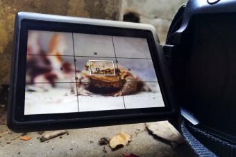 Camera filming a frog