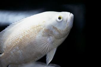 100+ White Fish Names From Cute to Clever