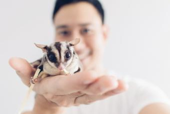 160+ Sugar Glider Names From Cute to Clever