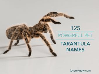 Powerful Pet Tarantula Names