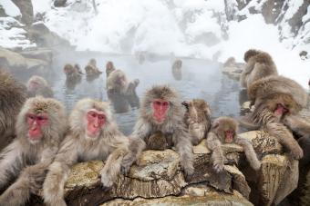 7 Pet Monkey Breeds Worth Considering