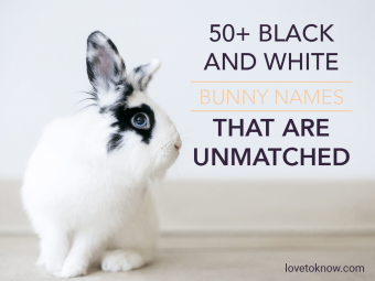 Black and White Bunny Names That Are Unmatched