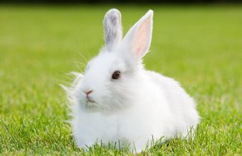70+ White Bunny Names From Sweet to Creative
