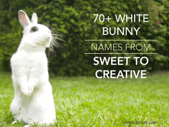 White Bunny Names From Sweet to Creative
