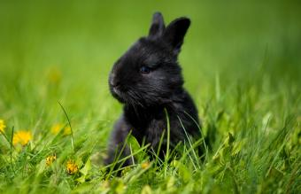50+ Black Rabbit Names From Tough to Playful