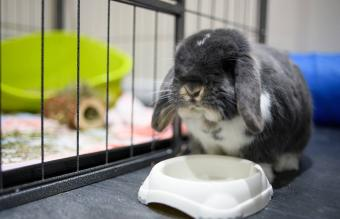 How to Clean a Rabbit Cage in Hassle-Free Steps