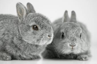 60+ Grey Bunny Names From Fun to Fancy