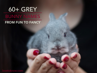 Small grey bunny in a woman's hands