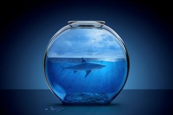 200+ Cool Shark Names That Make a Splash
