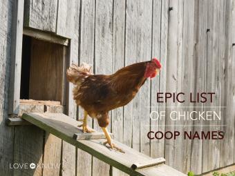 Epic chicken coop names