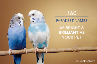 parakeet-names-160.png