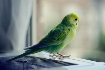 160 Parakeet Names as Bright & Brilliant as Your Pet