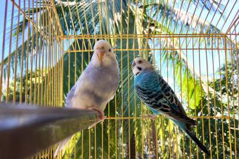 Parakeets in tropic