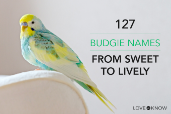 127 budgie names