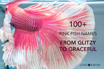 100+ pink fish names