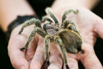 150+ Spider Names for Small Pets With Big Personalities