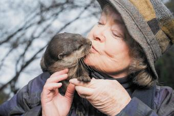 Can You Have an Otter as a Pet? The Legal Answer