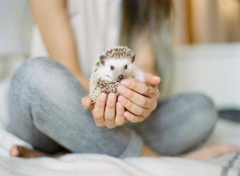 Woman holding hedgehog