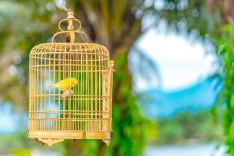 A Yellow Canary in A Cage