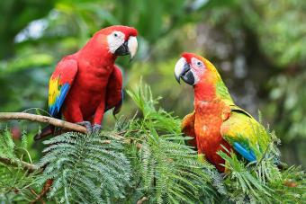 17 Parrot Facts Behind These Clever & Colorful Birds
