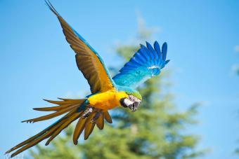 The flight of the parrot