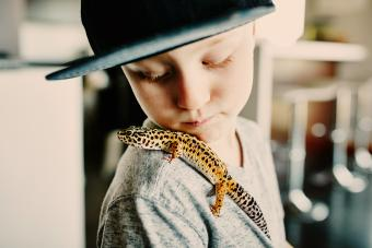 Young boy looking at pet leopard gecko resting on shoulder