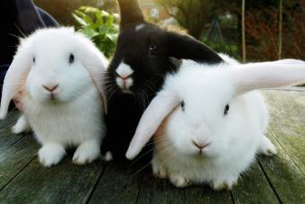 Basic Pet Rabbit Care Guide for New Owners