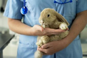 proper technique to hold a pet rabbit