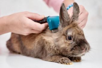grooming brush comb pet rabbit care