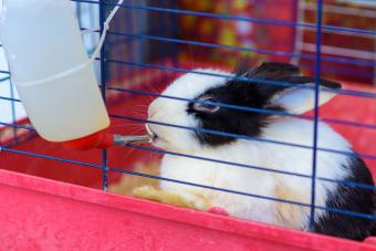 pet rabbit care drinking from water bottle in cage