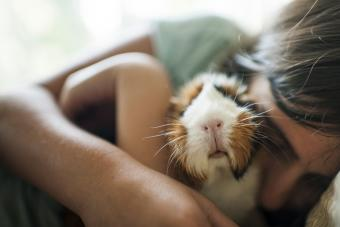8 Popular Small Pets and Why You'd Want to Own Them
