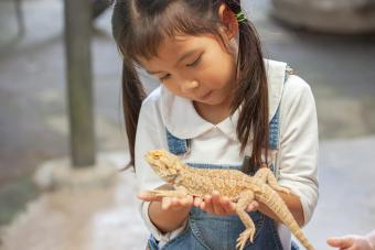 Best Reptile Pets for Handling (and Interaction Tips)