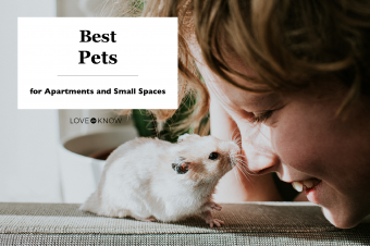 21 Best Pets for Apartments and Small Spaces