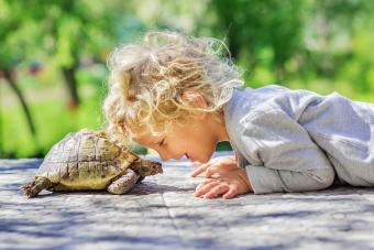 12 Types of Pet Turtles That Make Great Companions