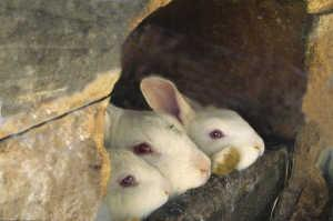 Rabbit family in a wood hutch.