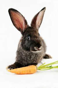 Black bunny with a carrot