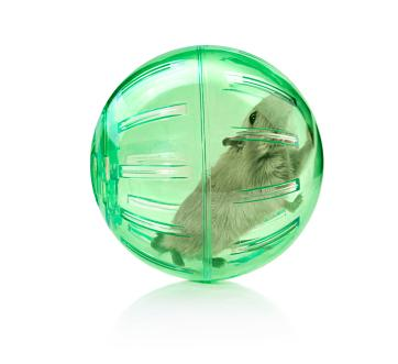 Gerbil in an exercise ball