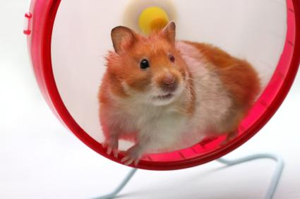 hamster in solid wheel