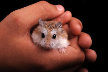 holding a hamster