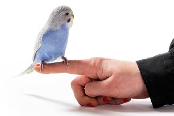 Parakeet Training
