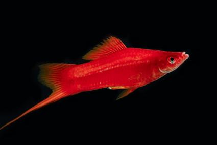 Popular Tropical Aquarium Fish Lovetoknow