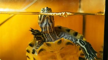 Names for Pet Turtles | LoveToKnow