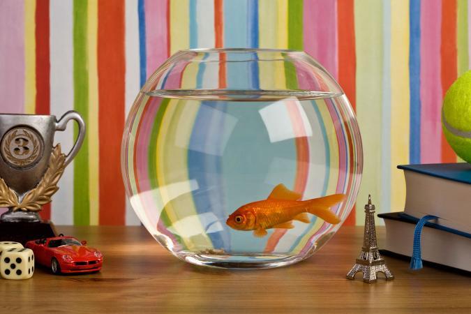 Fish Tank Decoration Ideas Using Everyday Items Lovetoknow