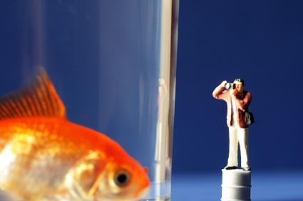 Goldfish looking at tiny visitor