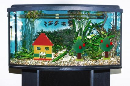Fishtank with Lego House and Trees