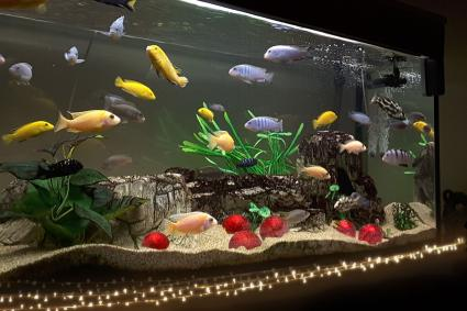 Fish tank decoration ideas using everyday items lovetoknow - Fish tank christmas decorations ...