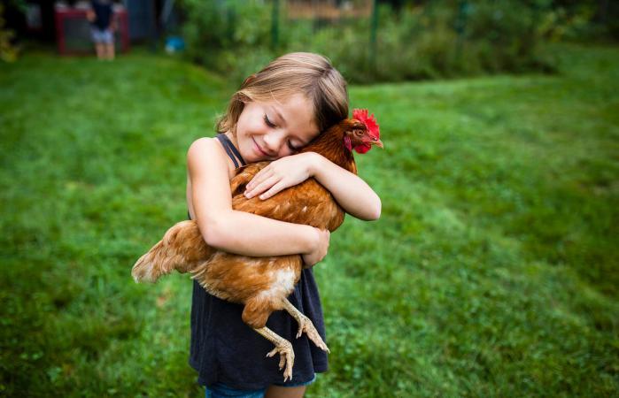 Child holding pet chicken