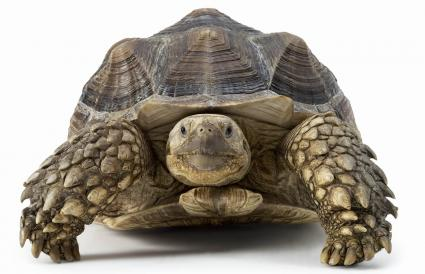 Names for Pet Turtles | LoveToKnow
