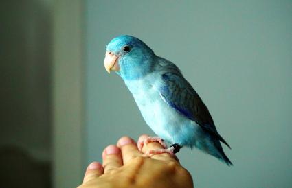 Types Of Pet Parrots Lovetoknow